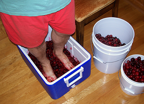 Crushing cherries in a chest cooler with bare feet