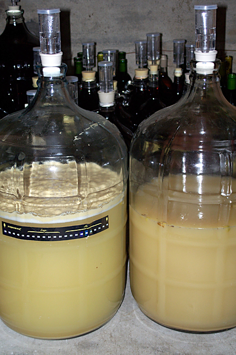 Two carboys of fermenting Chardonnay, press juice at left and free run on the right, on 10/17/07