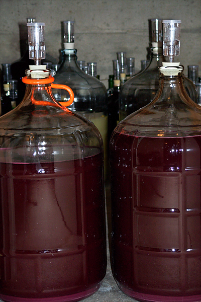 Pressed Merlot in 5-gallon carboys, press wine in the carboy with the orange handle and free run in the carboy on the right. 10/20/07
