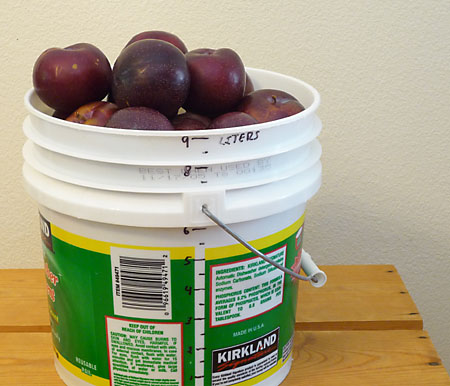 12 lb of store-bought plums